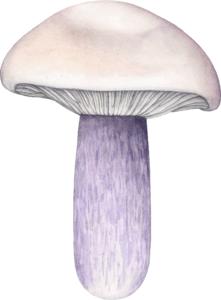 Illustration de Lepista saeva pour un jeu de cartes de champignons comestibles