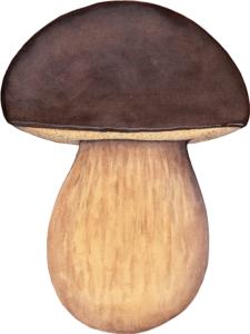 Illustration du Boletus Aereus pour un jeu de cartes de champignons comestibles
